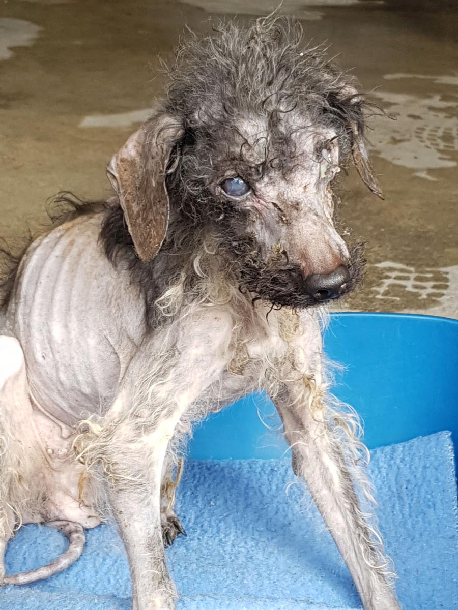 53 chiens sauvés par la SPA de Lyon