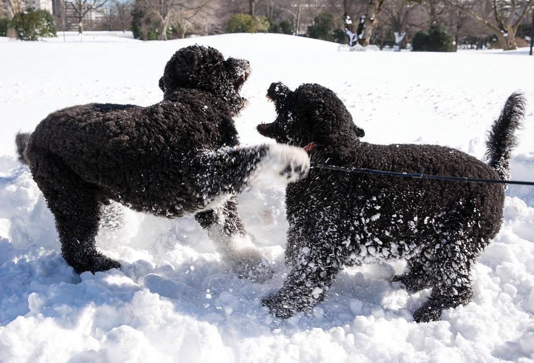 sunny bo joue dans la neige