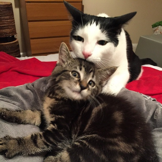 rencontre pour jeune adulte rencontre chat adulte et chaton