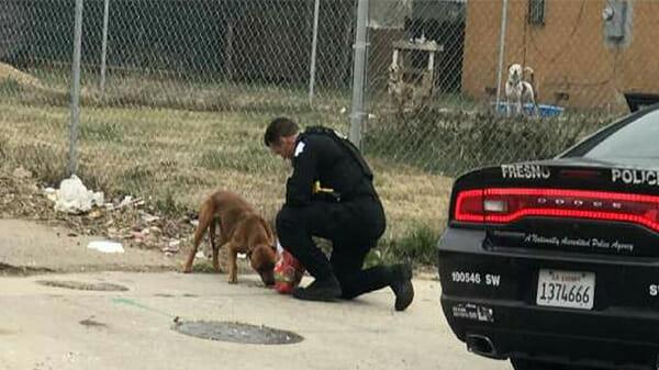 chien policier voiture