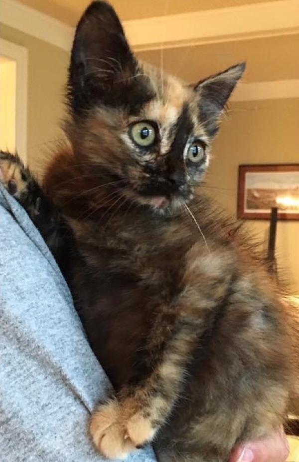 chaton sauvé pont