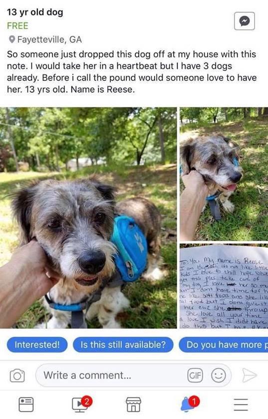 facebook chien abandonné