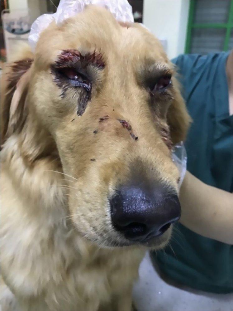 Choquant ! Ce chien aurait été violemment battu dans un avion en Chine