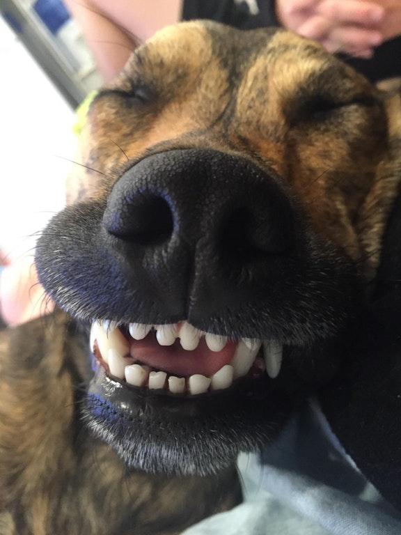 chien grand sourire