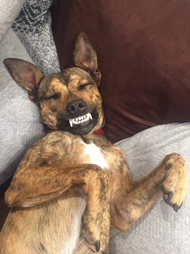 Ce chien sauvé d'une mort certaine est le pro des sourires