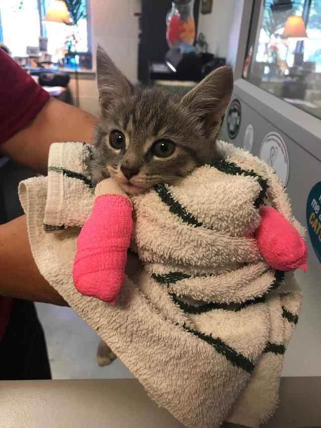 chaton bandages