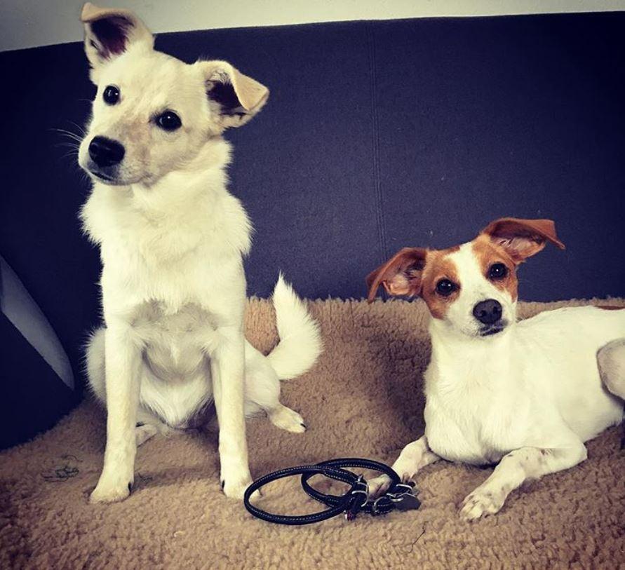 chien sans collier