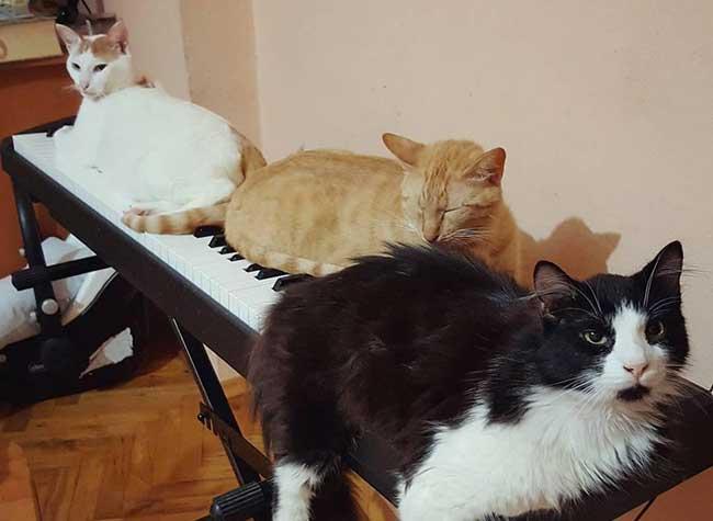 Ce pianiste sauve des chats errants, ils deviennent ses plus grands fans !