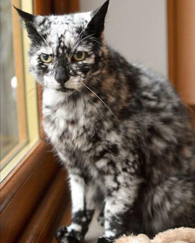 scrappy chat noir blanc