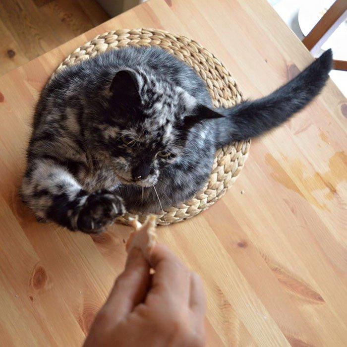 chat noir vitiligo