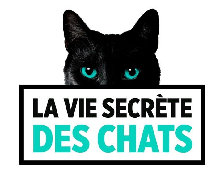 vie secrète chats