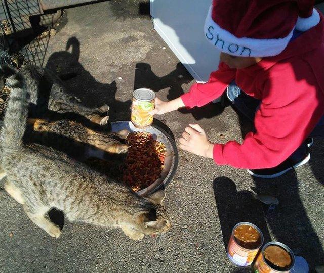 petit garçon prend soin de chats errants