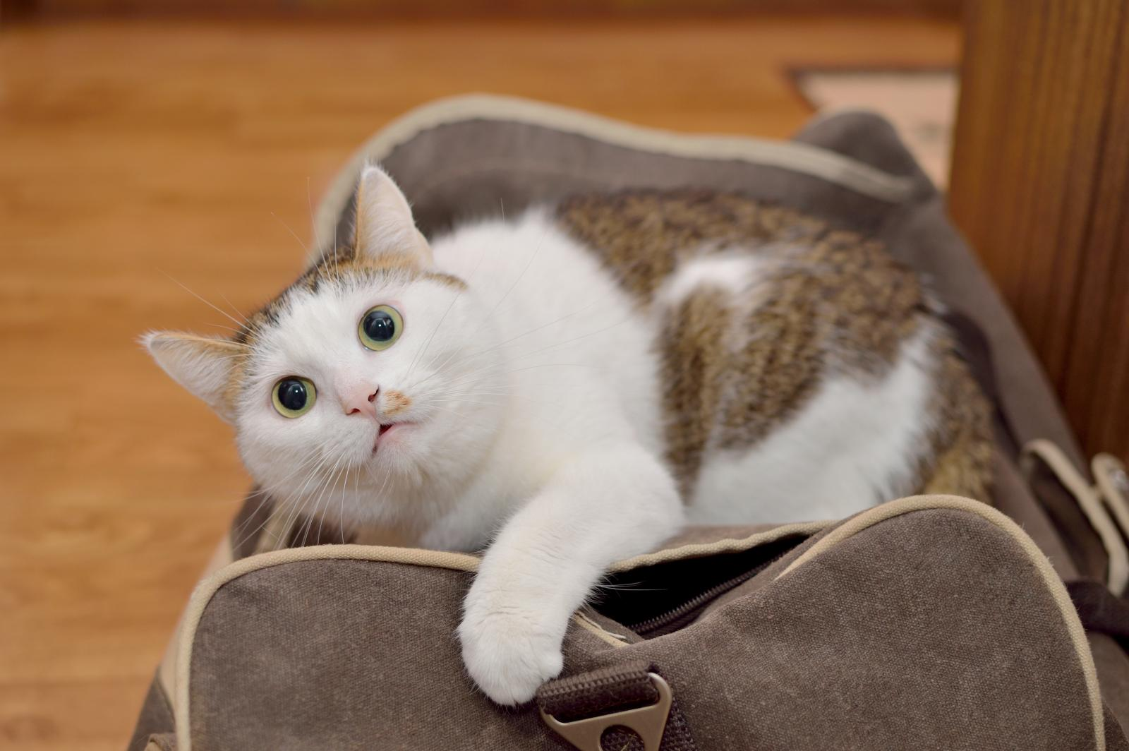 chat voyage préparatif