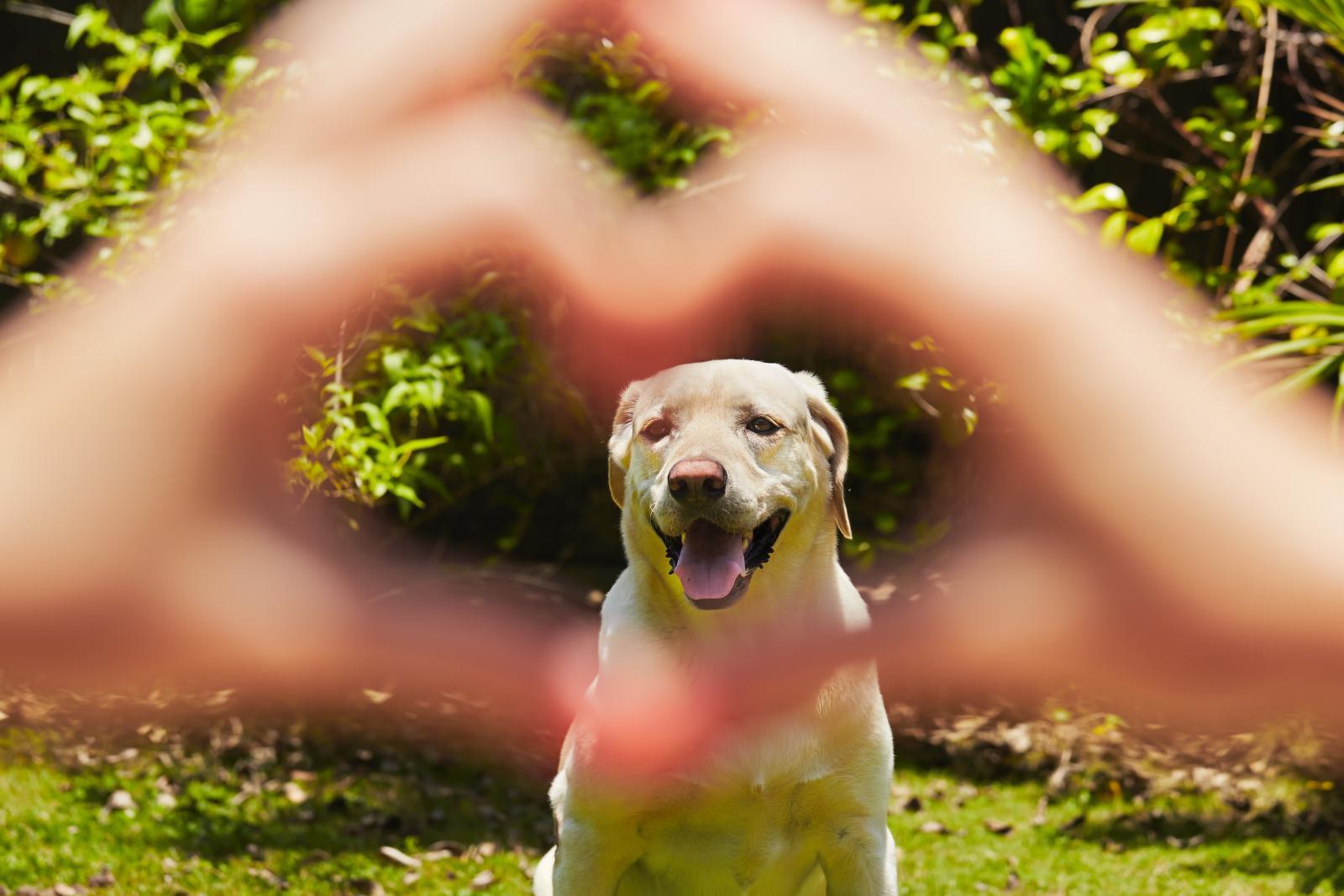 chien coeur amour