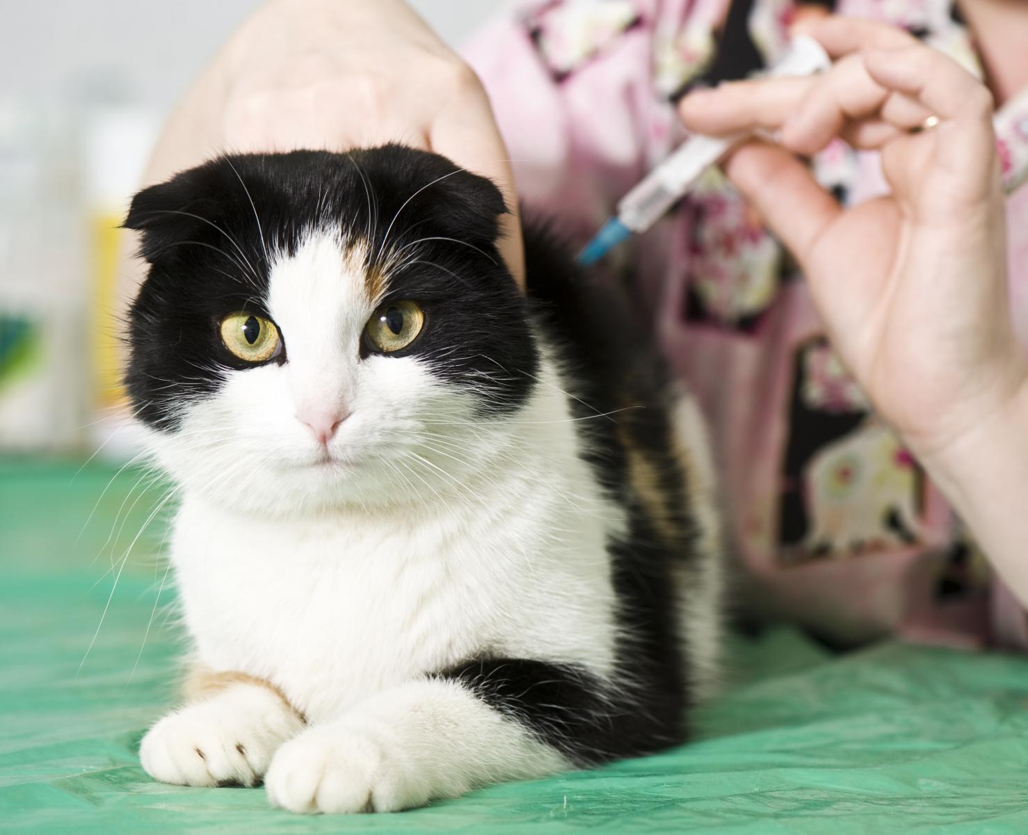 chat vaccin maladies