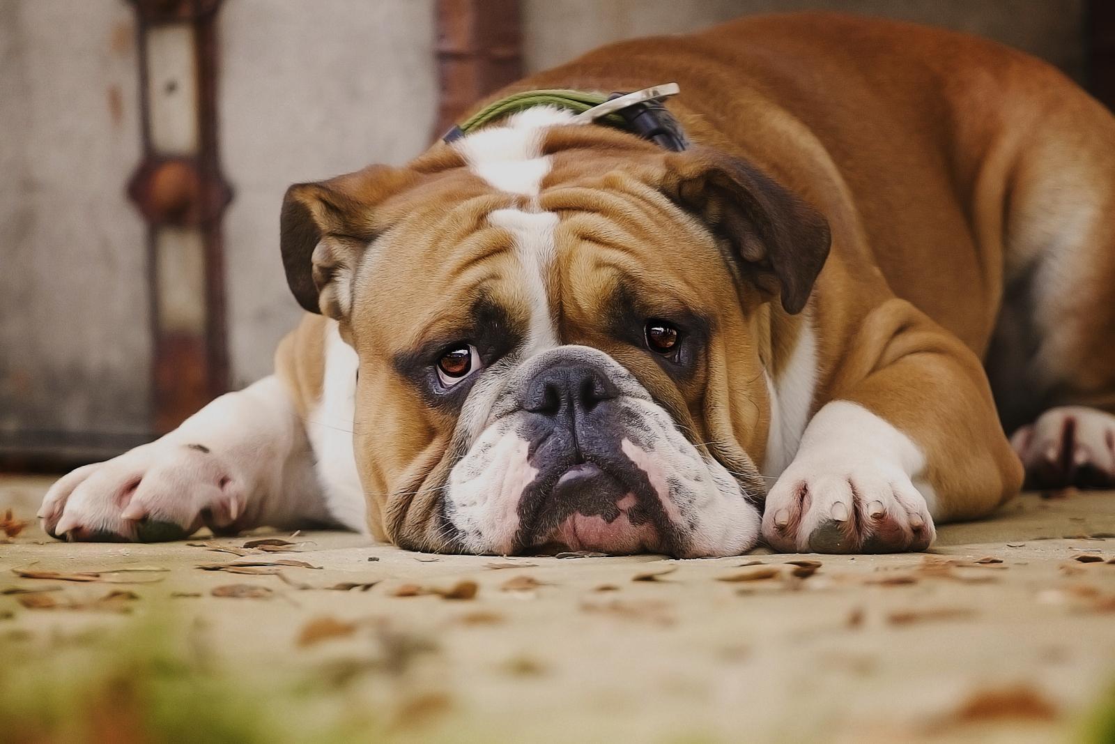 """Résultat de recherche d'images pour """"sentiment chien"""""""