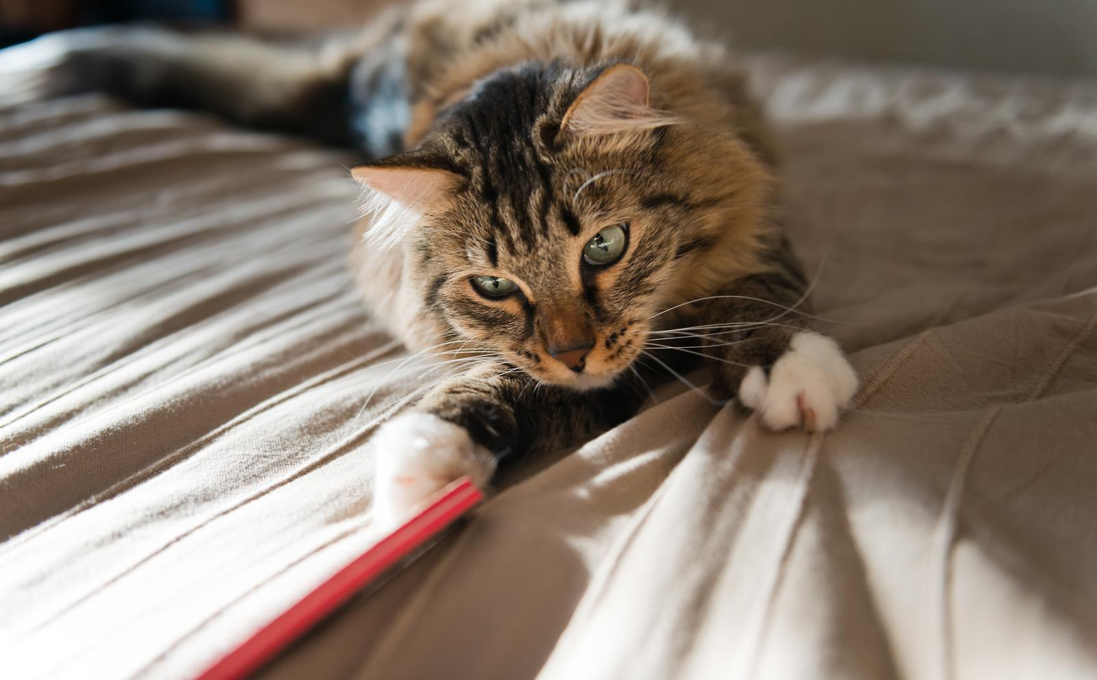 chat jeu