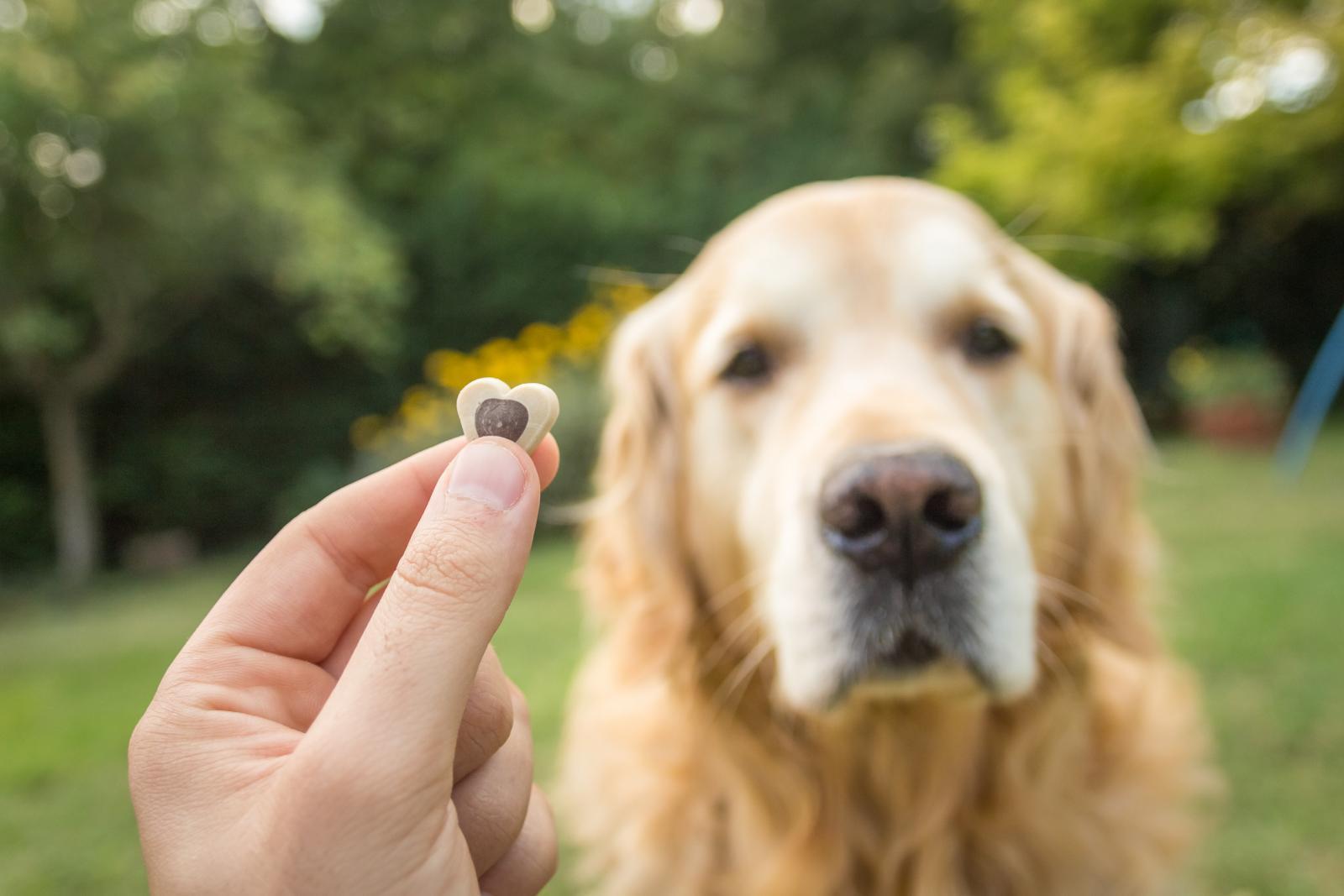 chien éducation récompense