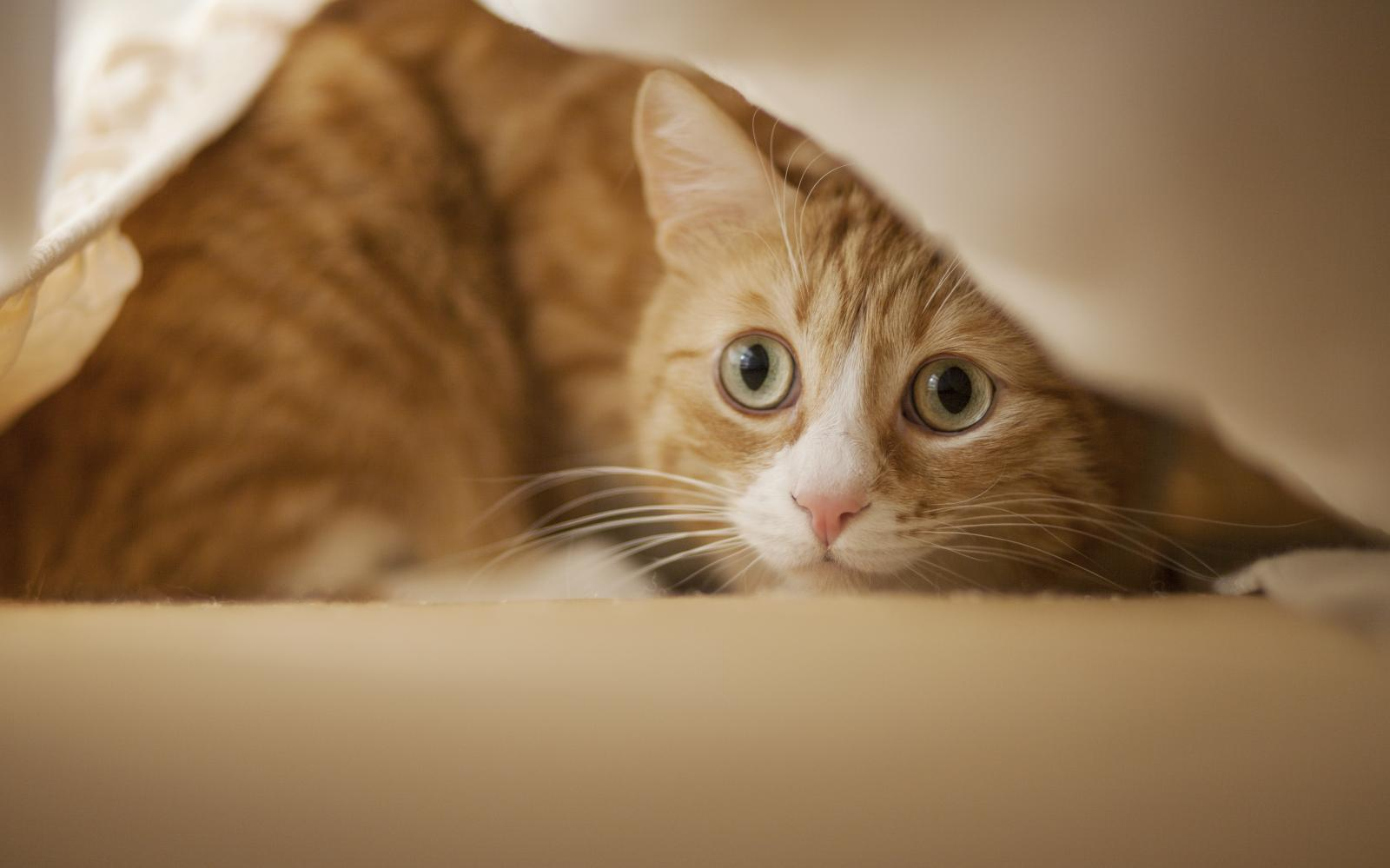 Pourquoi Mon Chat Me Reveille Il La Nuit Comprendre Son Chat Wamiz