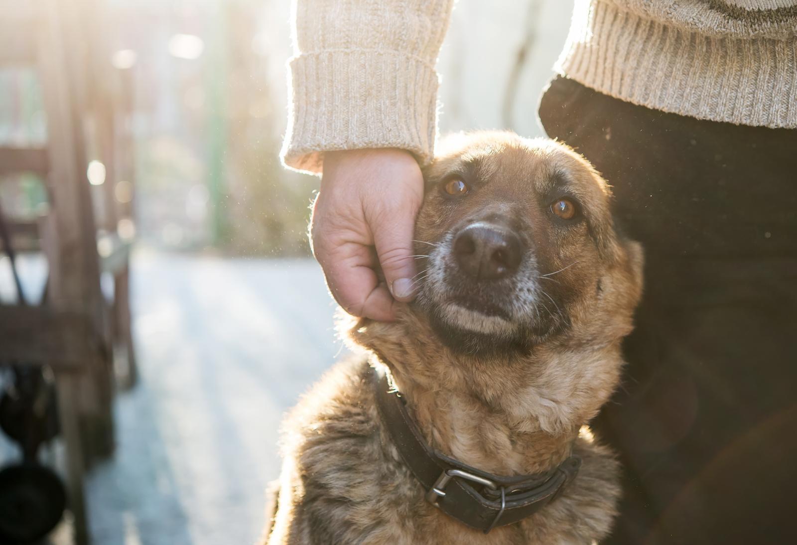 controler chien