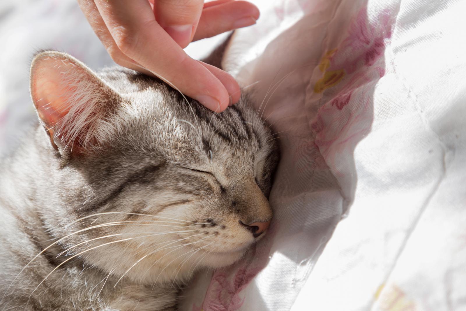 chaton enfant ronron thérapie