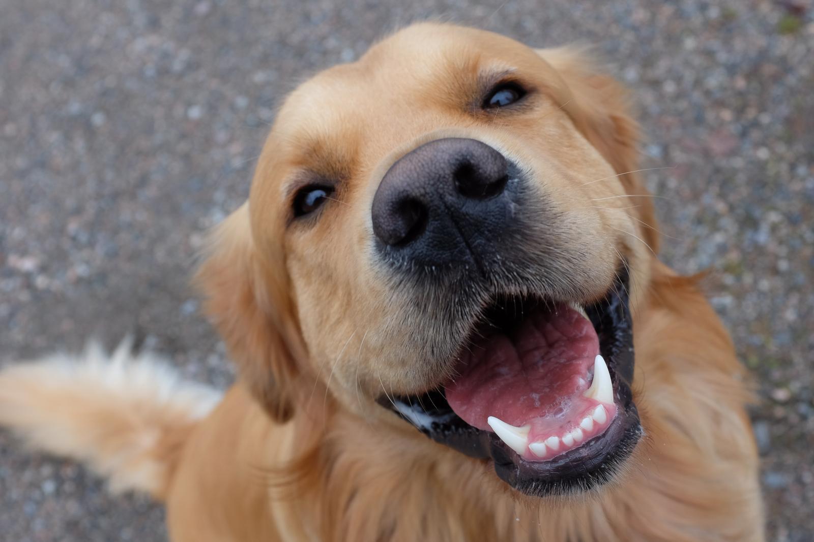 chien qui rigole rire
