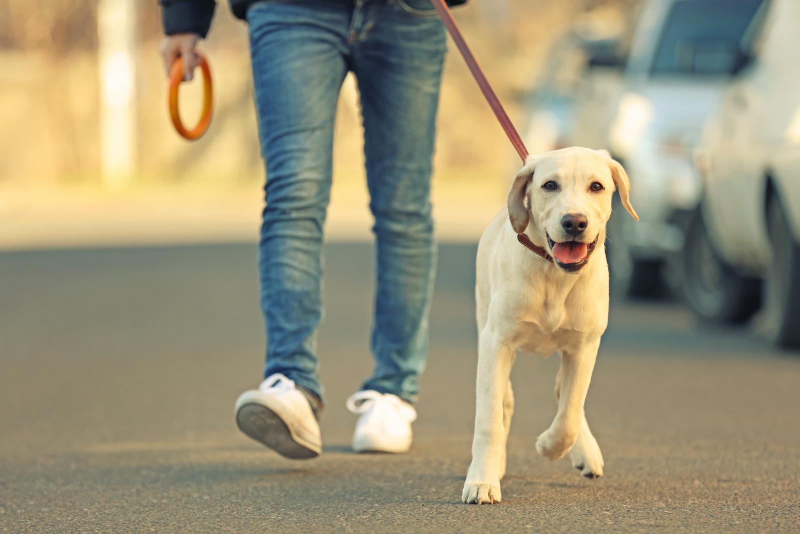 chien ordre marcher laisse
