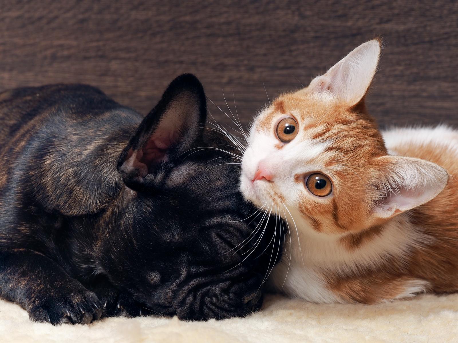 chat et chien dorment