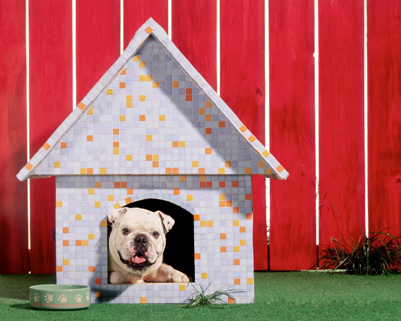 niche extérieure chien