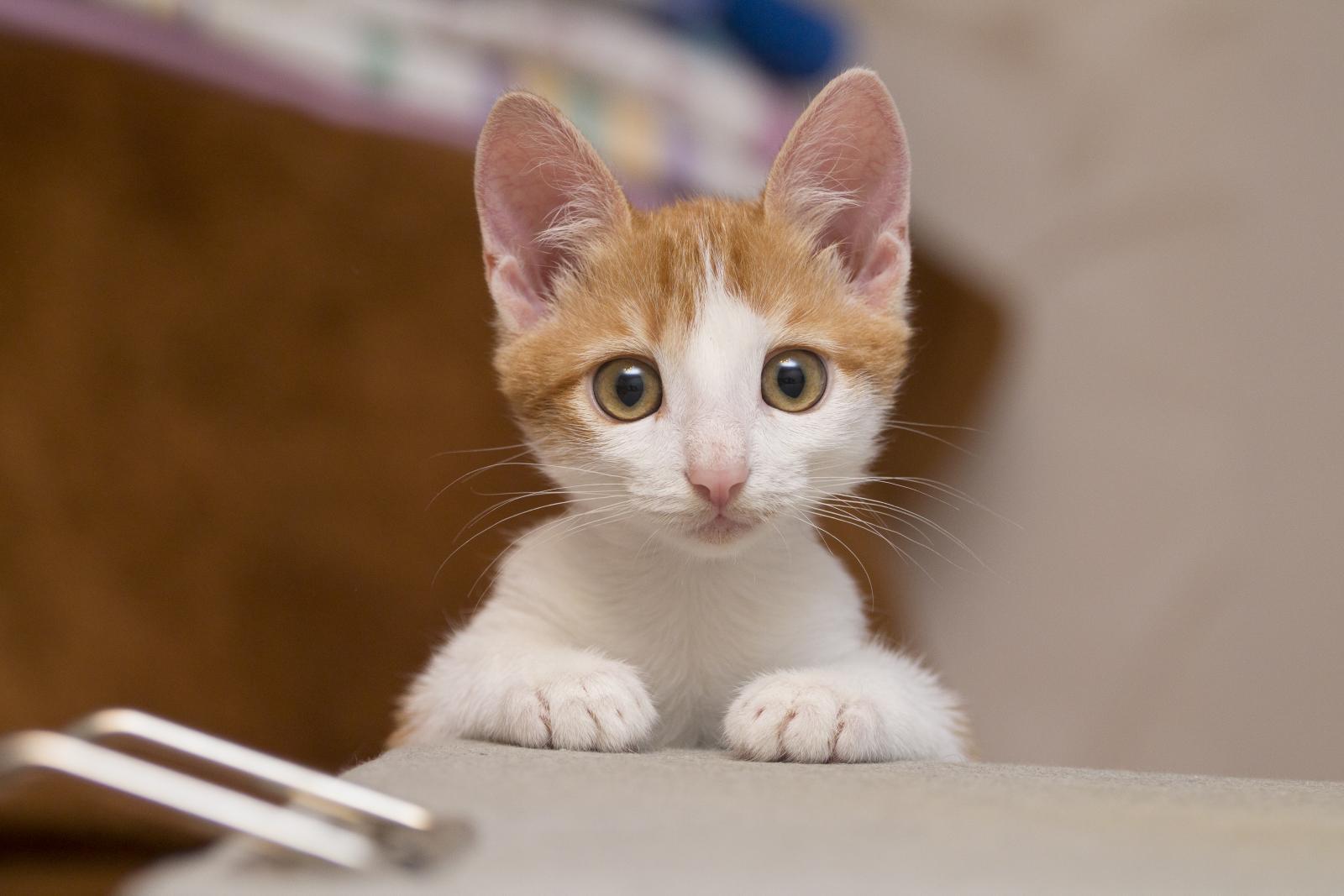accueillir chaton