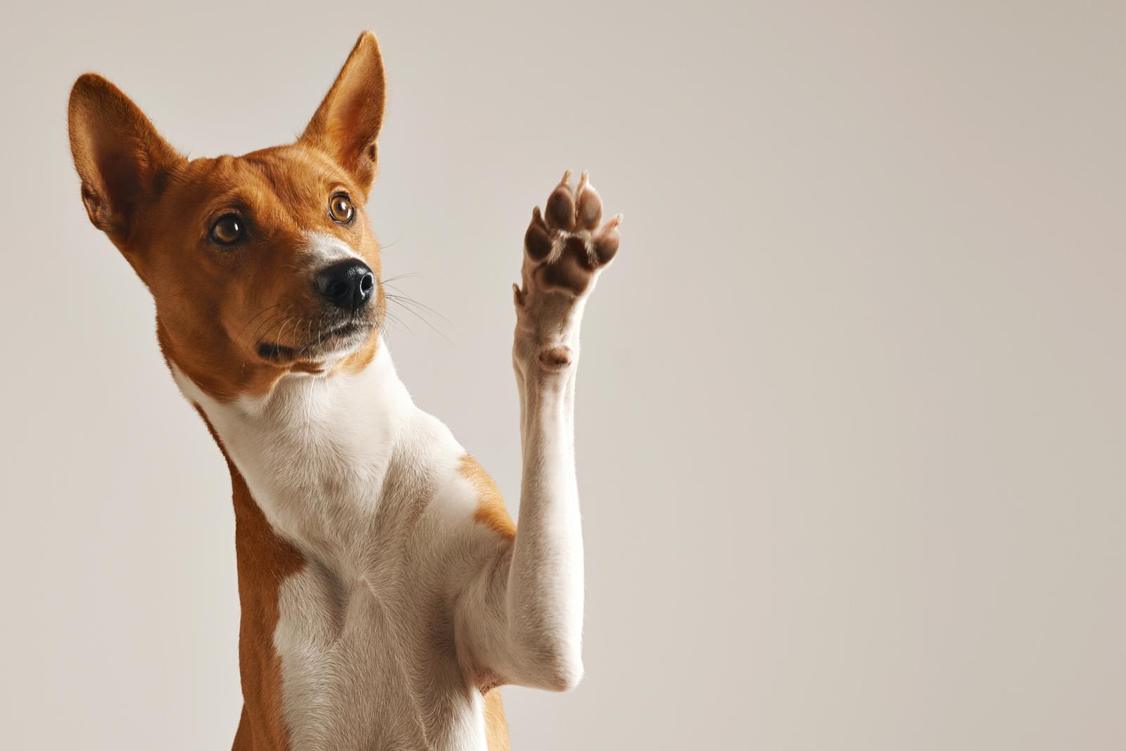 chien qui donne patte
