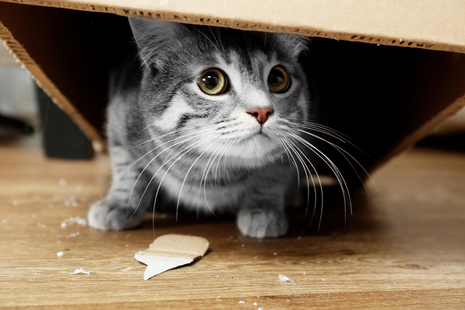 chat caché boite