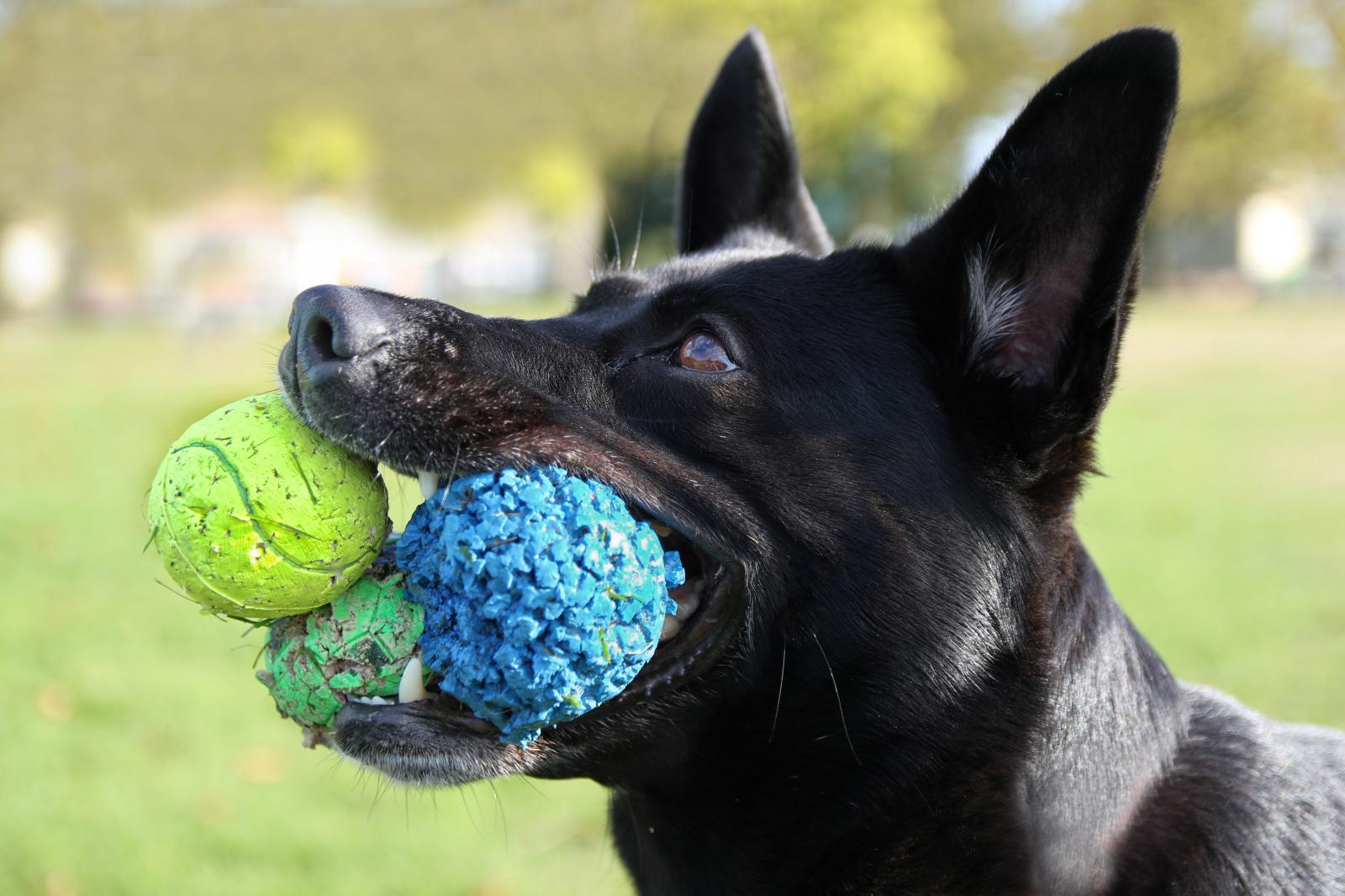 chien ballon jeux