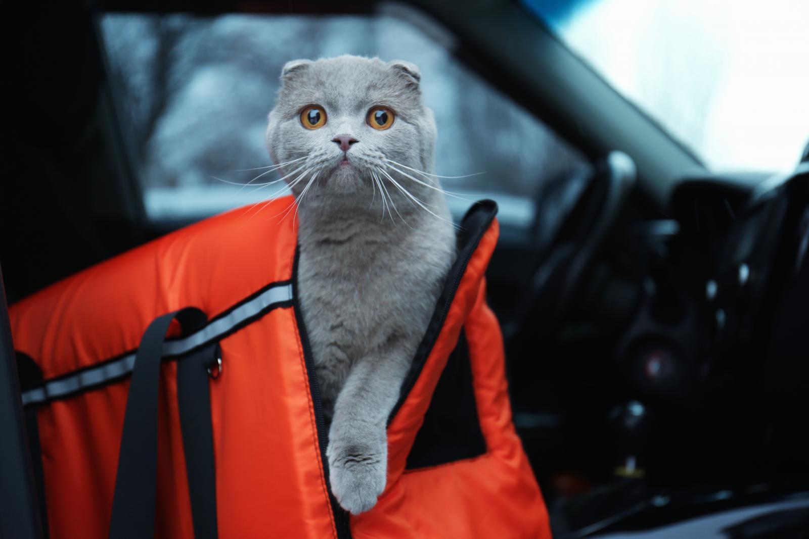 voyage chat voiture dangers