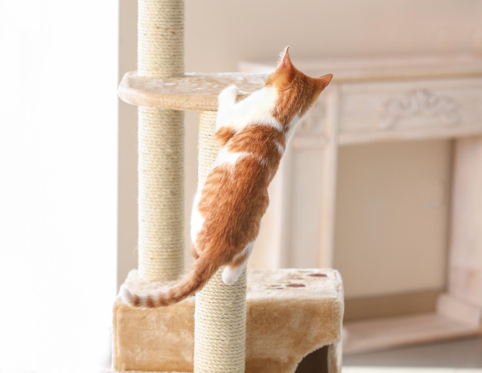 arbre à chat