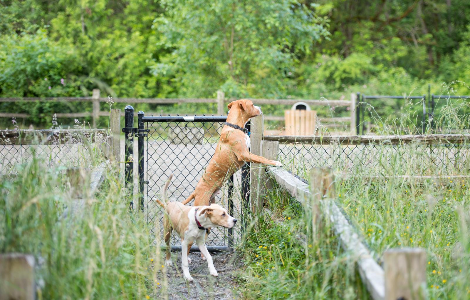 Collier electrique chien perimetre