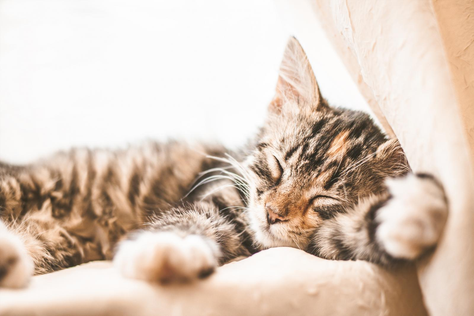 chatons trop mignon dort