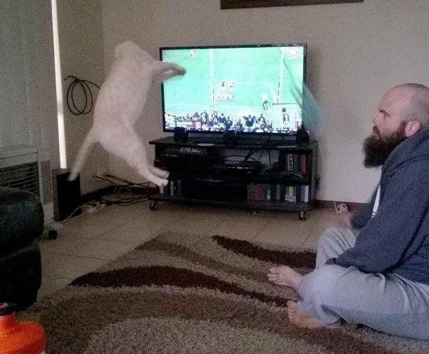 Ce chat a trouvé une technique géniale pour se faire adopter