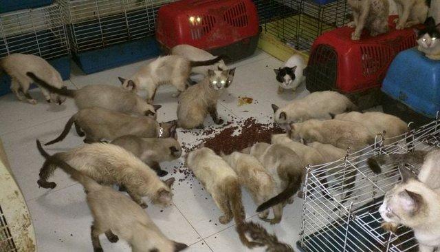 élevage clandestin chats