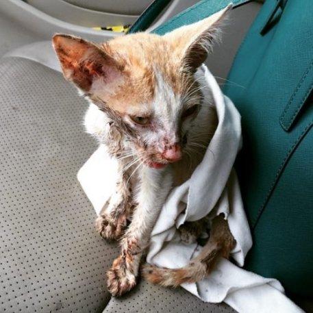 chat trouvé mâchoire cassée