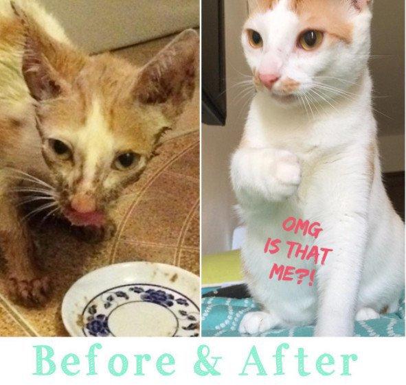 chat avant après sméagol