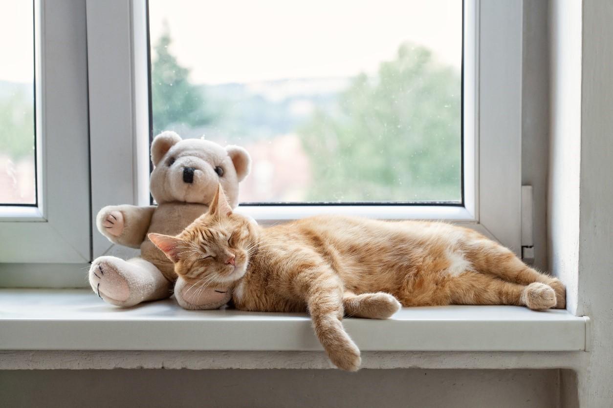 sommeil du chat et chaton