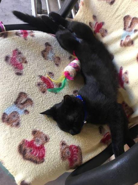 chat adopté commissariat bourke