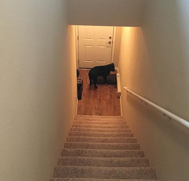 tom le chien mourant enchaîné pendant 4 ans