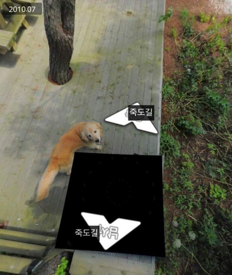 street view chien corée