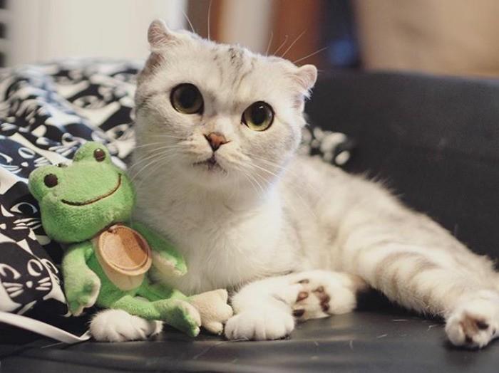 hana le chat star du web