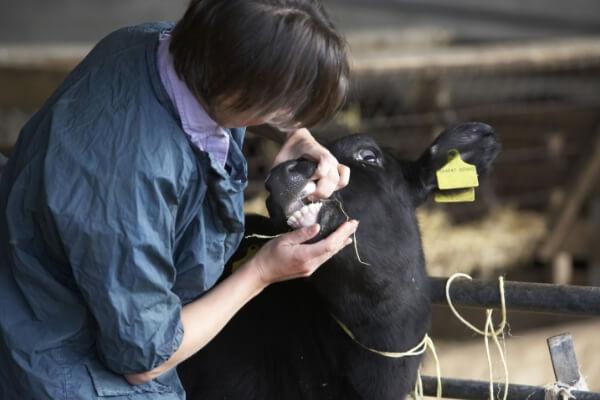 Tarifs vétérinaires en France : des prix qui vont du simple au triple ?