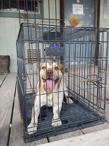 Ce chien ligoté avec la gueule scotchée est trop heureux d'avoir été sauvé