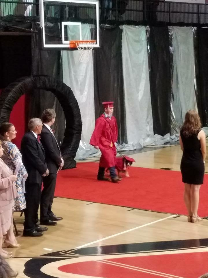 chien diplômé assistance