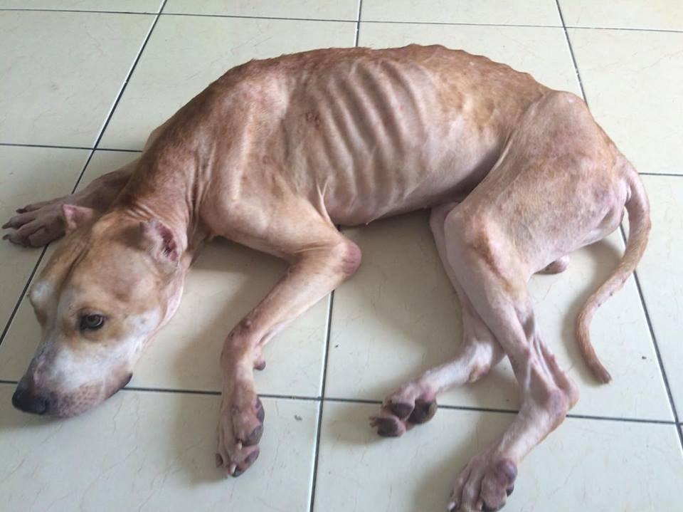 TinTin chien affamé